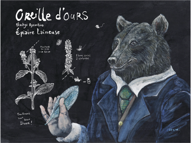 Oreille d'ours